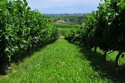 Απόφαση για τις επιτρεπόμενες ποικιλίες δενδροκαλλιεργειών από το ΥΠΑΑΤ